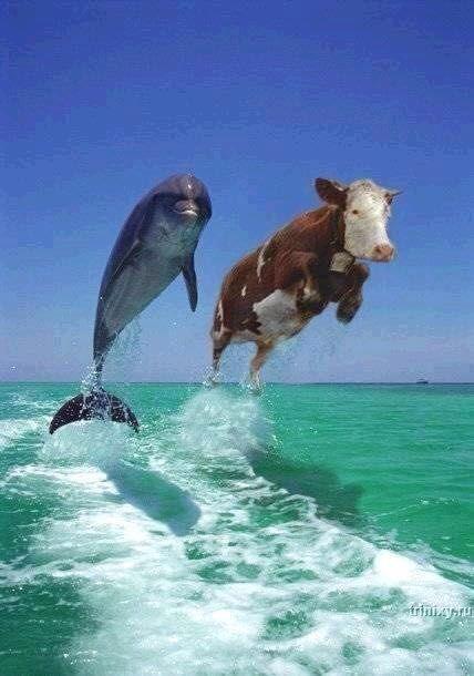 Дельфин и корова